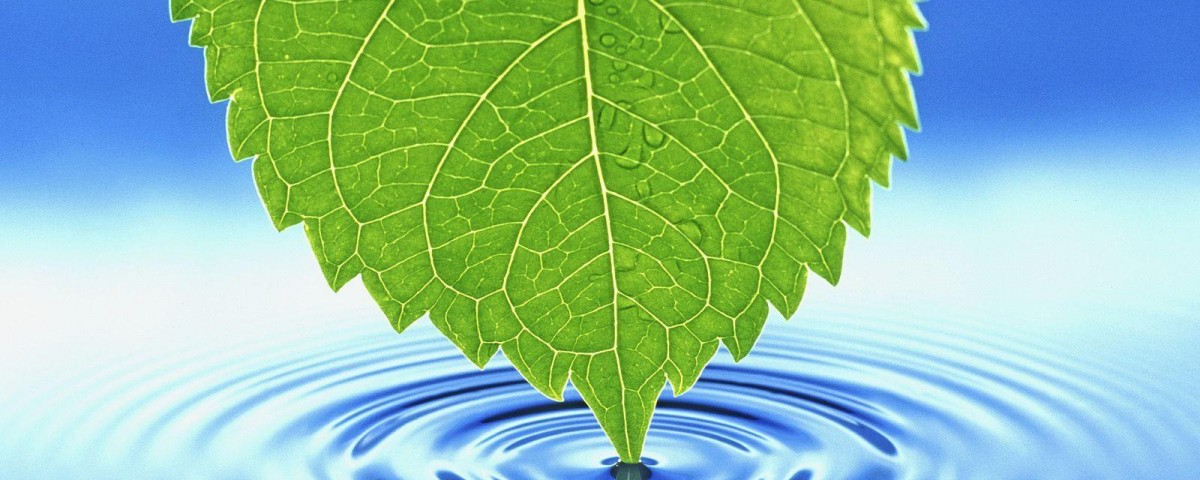 Nature_Seasons_Summer_Leaf_touching_water_007266_