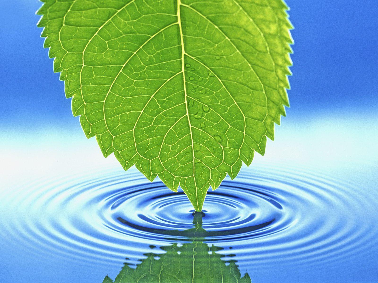 Nature_Seasons_Summer_Leaf_touching_water_007266_